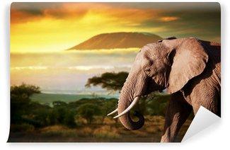 Elephant on savanna. Mount Kilimanjaro at sunset. Safari Wall Mural - Vinyl