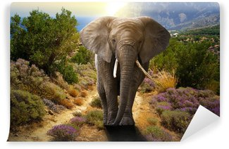 Wall Mural - Vinyl Elephant walking on the road at sunset