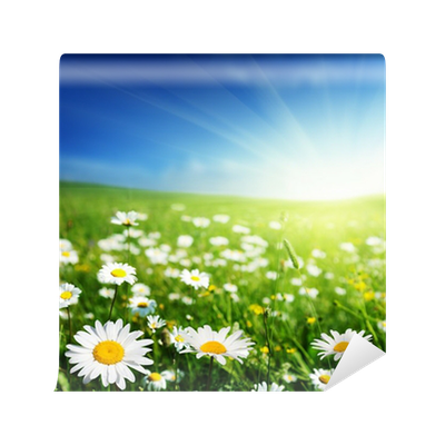 Field of daisy flowers wall mural pixers we live to for Daisy fuentes wall mural