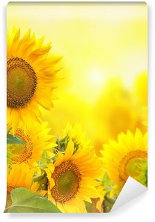 Field with sunflowers. isolation Wall Mural - Vinyl