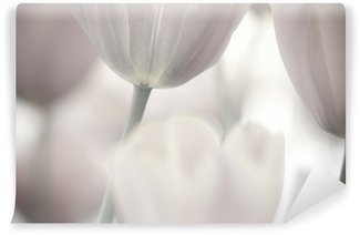 Wall Mural - Vinyl Fine art of close-up Tulips, blurred and sharp