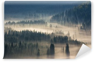 fir trees on a meadow down the will to coniferous forest in foggy mountains Wall Mural - Vinyl