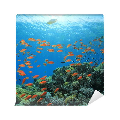 Fish and Coral Reef underwater Wall Mural • Pixers® • We ...