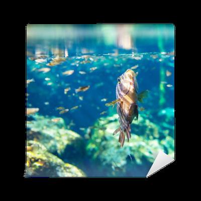 Fish underwater Wall Mural • Pixers® • We live to change