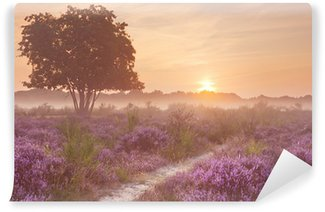 Fog over blooming heather in The Netherlands at sunrise Wall Mural - Vinyl