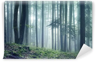 Forest landscape Wall Mural - Vinyl