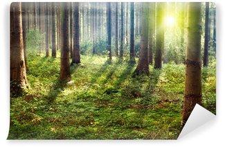 Vinyl Wall Mural Forest Sunset