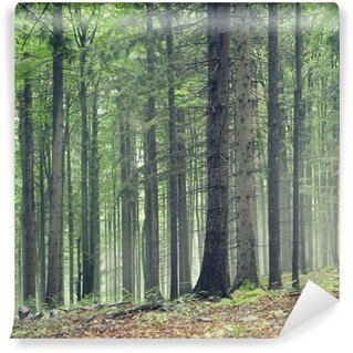 Forest trees Wall Mural - Vinyl