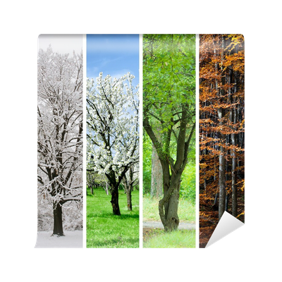 Four seasons collage winter spring summer autumn wall for 4 seasons mural