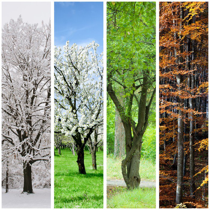 Four seasons collage winter spring summer autumn for 4 seasons mural