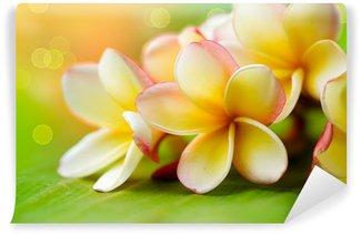 Wall Mural - Vinyl Frangipani Tropical Spa Flower. Plumeria. Shallow DOF