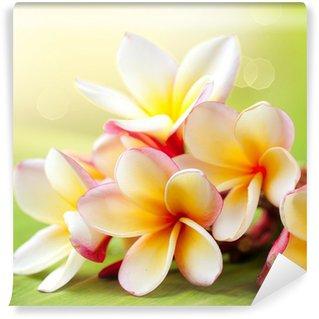 Wall Mural - Vinyl Frangipani Tropical Spa Flower. Plumeria
