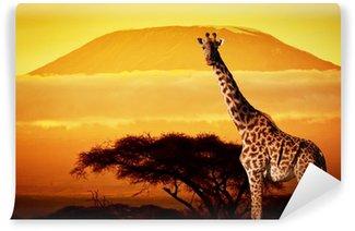 Giraffe on savanna. Mount Kilimanjaro at sunset. Safari Wall Mural - Vinyl