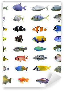 Great tropical fish collection on white background Wall Mural - Vinyl
