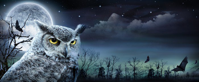 wall mural vinyl halloween scene with owl and full moon international celebrations - Halloween Wall Mural