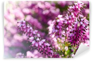 Heather flowers blossom in march Wall Mural - Vinyl