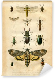 Vinyl Wall Mural Histoire naturelle : Les insectes