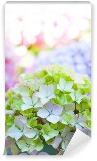 Hortensia multicolores - hydrangea Nortensis Wall Mural - Vinyl