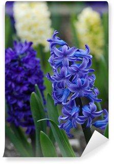 hyacinth flowers in spring garden Wall Mural - Vinyl
