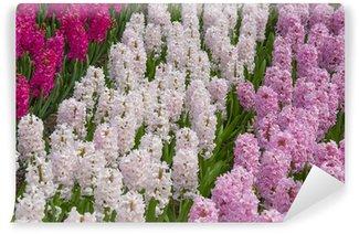 hyacinths in the spring garden Wall Mural - Vinyl