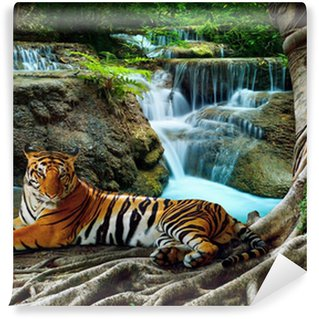 indochina tiger lying with relaxing under banyantree against bea Wall Mural - Vinyl