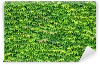 ivy Wall Mural - Vinyl