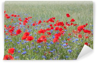 Landscape with poppies and cornflowers.
