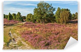 Landschaft mit Wacholder in der Lüneburger Heide, Steingrund