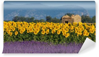 Lavender and sunflower setting in Provence, France Wall Mural - Vinyl