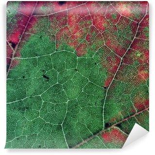 Wall Mural - Vinyl Leaves in Fall Season Color