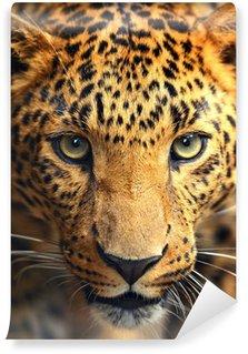 Leopard portrait Wall Mural - Vinyl