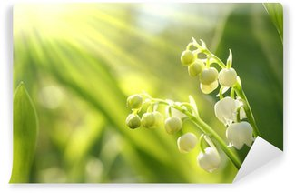 Lilly of the valley in the forest at sunrise Wall Mural - Vinyl