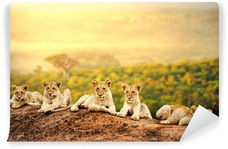 Lion cubs waiting together. Wall Mural - Vinyl