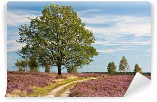 Lüneburger Heide, Pfad durch blühende Heidelandschaft mit Eiche Wall Mural - Vinyl