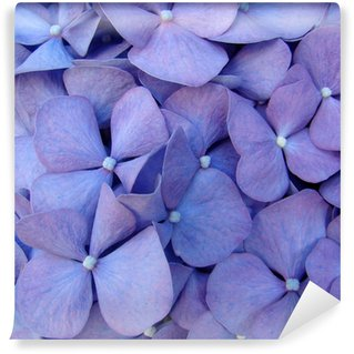 macro of hortensia flower