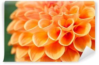Macro view of orange flower dahlia Wall Mural - Vinyl