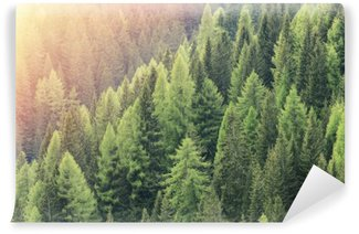 Magic forest lit by the sunlight. Coniferous forest region. Wall Mural - Vinyl