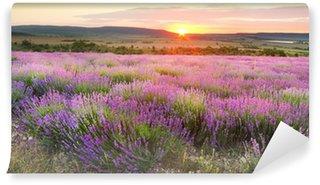 Meadow of lavender. Wall Mural - Vinyl