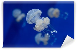 Vinyl Wall Mural medusa jellyfish underwater diving photo egypt red sea