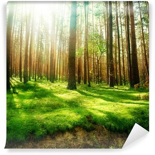 Misty Old Forest Wall Mural - Vinyl