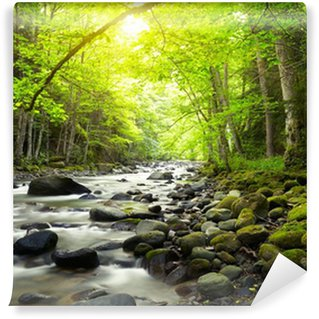 Mountain River in the wood Wall Mural - Vinyl