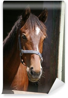Nice purebred horse watching in his stable