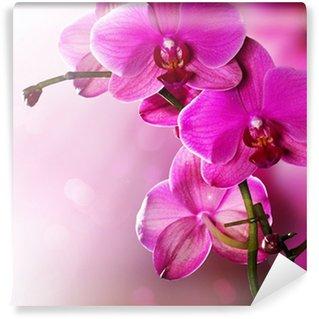 Orchid Flower border design Wall Mural - Vinyl