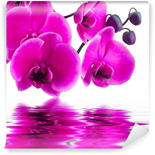 Vinyl Wall Mural orchid flower in closeup with reflection in water