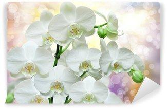 orchid flower Wall Mural - Vinyl