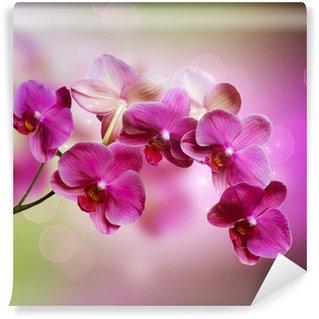 Orchid Wall Mural - Vinyl