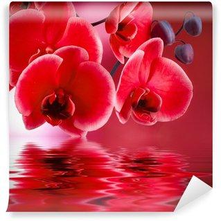 Wall Mural - Vinyl orquídeas rojas con fondo y agua