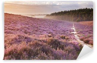 Path through blooming heather at sunrise, Posbank, The Netherlan Wall Mural - Vinyl