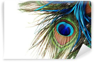Wall Mural - Vinyl Peacock Feather