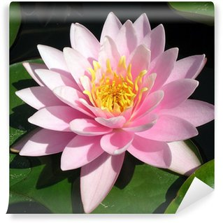 perfect pink water lily Wall Mural - Vinyl